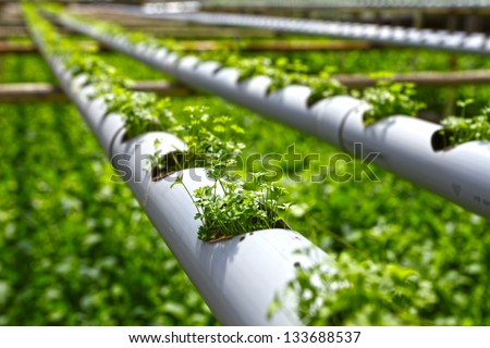 Planting hydroponics - stock photo