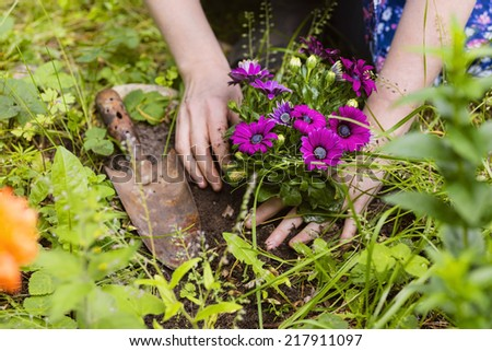 planting of flowers with hand of a woman - stock photo