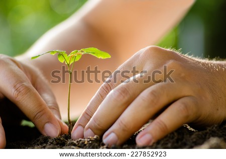 Planting,Seeding,Seedling,Close up Male hand planting young tree over green background - stock photo