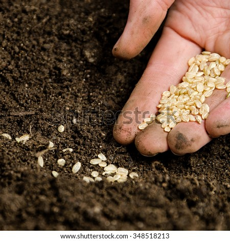 Planting small seeds into the soil - stock photo