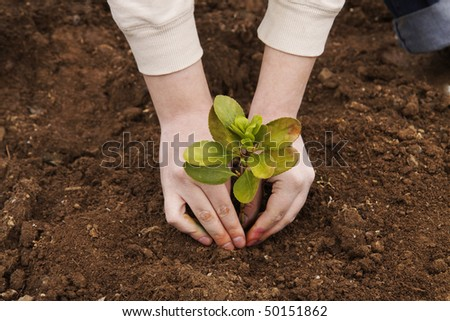 planting three  in the garden - stock photo