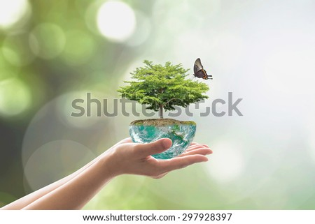 Planting tree in green globe on female human hands with a butterfly on blurred natural  background arbor greenery wood: Environment conservation CSR concept : Elements of this image furnished by NASA - stock photo