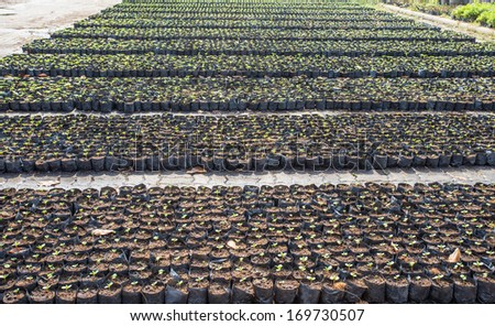 Planting tree in the plot at garden - stock photo