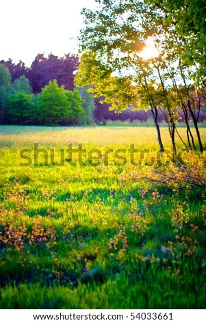 plants for natural background, fluffy wild plant grouped in sunny day - stock photo