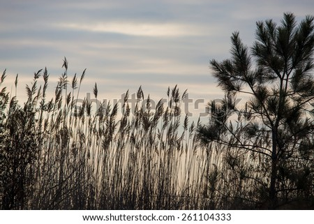 Plants growing along the shore of the Chesapeake Bay at Flag Ponds Nature Park in Calvert County, Maryland. - stock photo