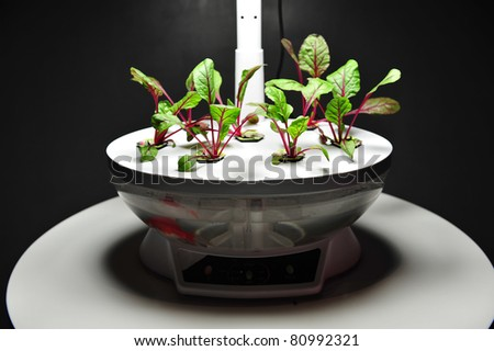 Plants growing in a laboratory - stock photo