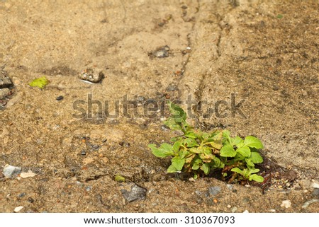 Plants growing through crack in pavement - stock photo