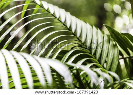 Plants in Amazon Forest, Brazil - stock photo