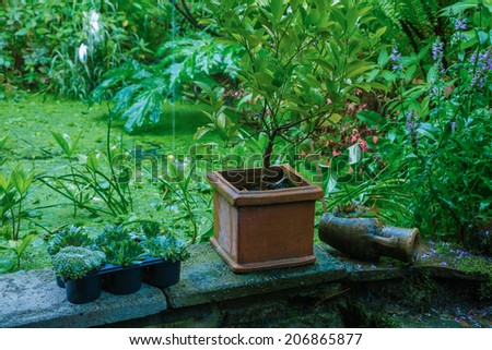 plants in front of a garden pond - stock photo