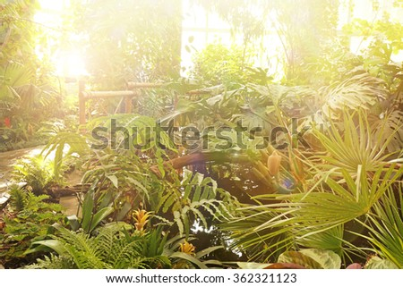 Plants in greenhouse at botanic garden - stock photo