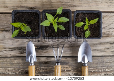 Plants in pots and gardening tools - stock photo