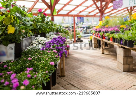 Plants in pots on sale at the local garden center. - stock photo