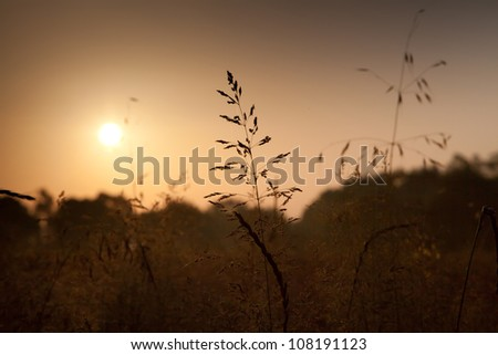 Plants in the rays of the rising sun - stock photo