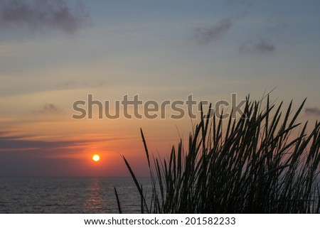plants in the sundown at the shoreline in holland - stock photo