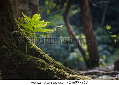 plants in tropical forest - stock photo