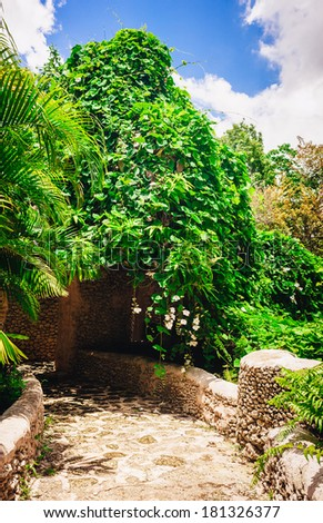 plants in tropical garden. view of the lush green vegetation and palm trees growing in the mountains in the Dominican Republic. Altos de Chavon, Casa de Campo, La Romana, Dominican Republic. - stock photo