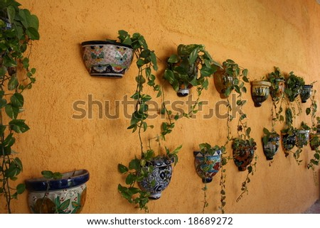 Plants on a Wall - stock photo