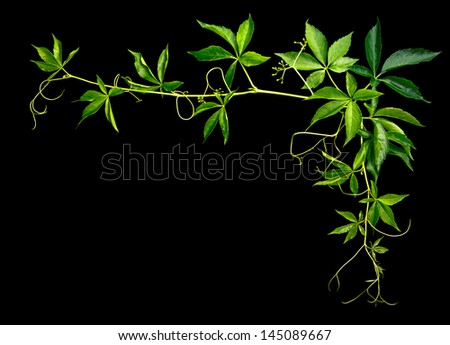plants ornament on a black background - stock photo
