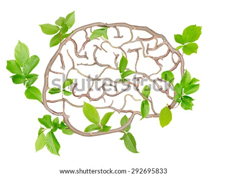 Plants with leaves forming brain isolated on white - stock photo