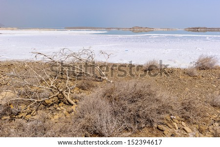 Plants with salt at the coast of the Dead Sea - stock photo