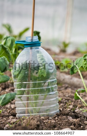Plastic bottle cloche - stock photo