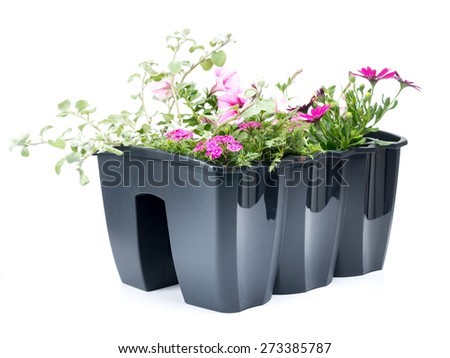 Plastic flower box with fresh flowers shot on white background - stock photo