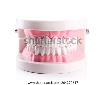 Plastic human teeth models isolated on white - stock photo