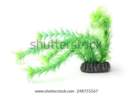 Plastic seaweed on white background - stock photo