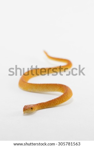Plastic snake toy isolated in front of a white background - stock photo
