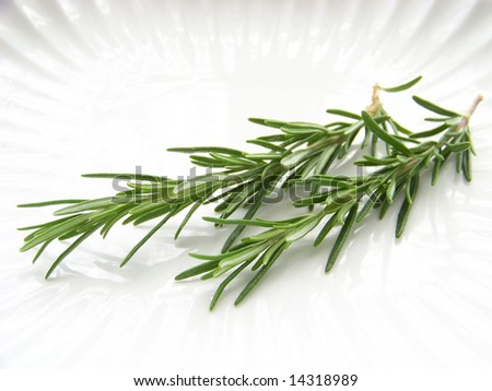 plate with rosemary - stock photo