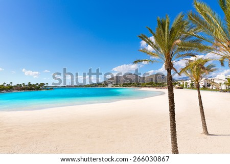 Platja de Alcudia beach palm trees in Mallorca Majorca at Balearic islands of Spain - stock photo