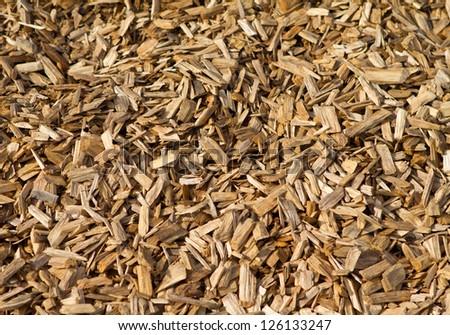 play bark - stock photo