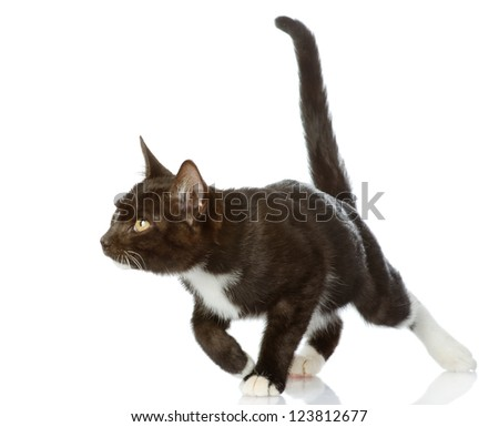 Playful black cat. isolated on white background - stock photo