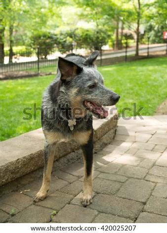 Playful Dog - stock photo