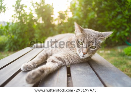 Playful domestic cat lying on one side on a black wooden bench looking at the camera. Shot outdoors in backlight with very shallow depth of field, focused on the green eyes. - stock photo
