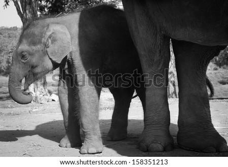 Playful Elephant - stock photo