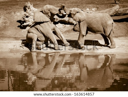 Playful elephants - stock photo