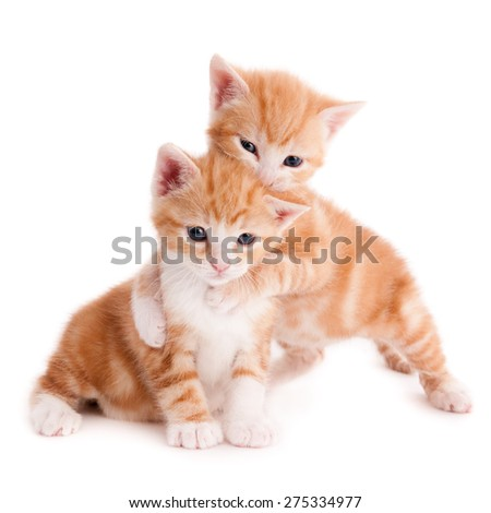 Playful ginger kittens, isolated on white - stock photo