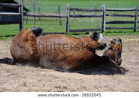 Playful Horse - stock photo