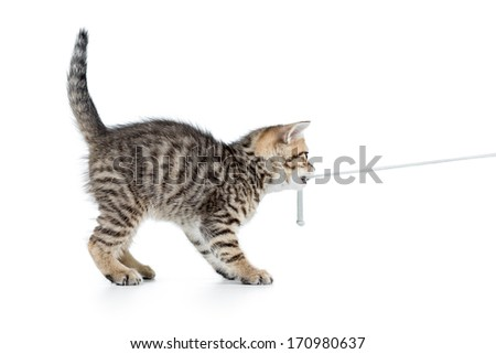 playful kitten cat pulls cord isolated on white - stock photo