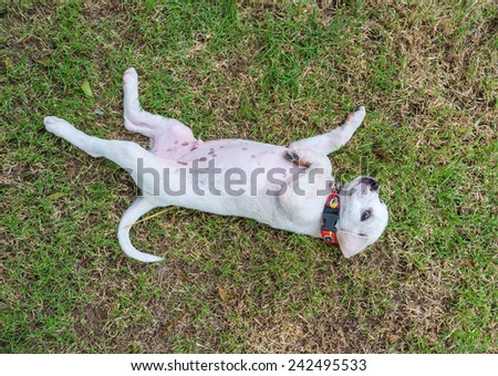 playful mixed breed puppy playing in the field - stock photo