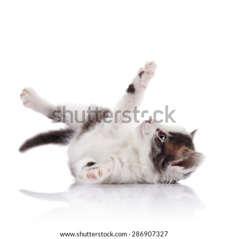 Playful spotty small kitten on a white background. - stock photo