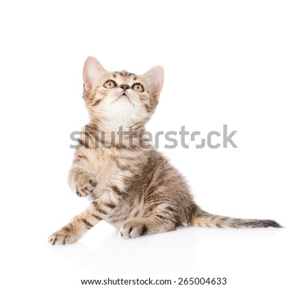 Playful tabby kitten looking up. isolated on white background - stock photo