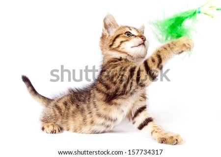 Playful tabby kitten plays with a green feather - stock photo