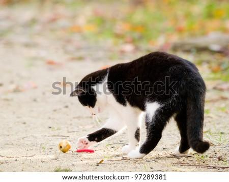 Playing cat - stock photo
