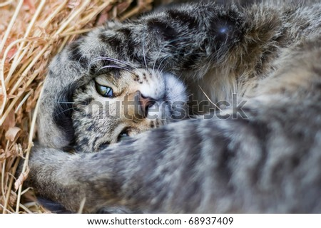 playing cat in the straw - stock photo