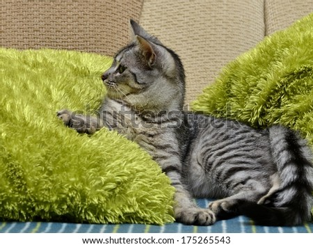 Playing cat on a sofa, small playing cat, playing cat close up in green blur warm light background, animals, domestic cat, cat playing on day time, cat in apartment - stock photo