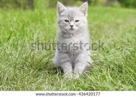 pleased kitten - stock photo