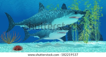 Pleistocene Megalodon Shark -  The Megalodon is an extinct megatoothed shark from prehistoric seas and was 20.3 meters or 67 feet long. - stock photo