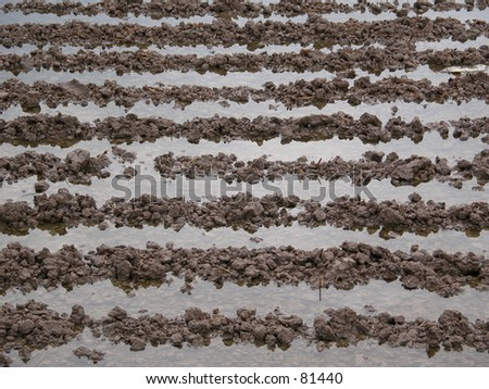 Ploughing patterns in the ground - stock photo